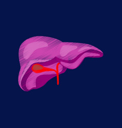 Flat shading style icon liver vector