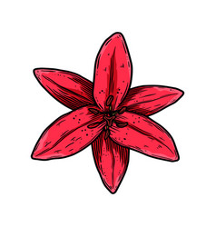 lily flower in engraving style design element vector image
