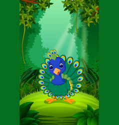 Peacock in the clear and green forest vector