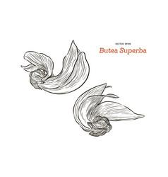 butea monosperma or palash flower of southeast vector image