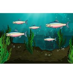 A school of fish vector image vector image