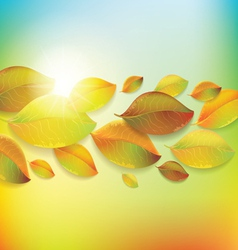 colorful background with autumn colorful leaves vector image vector image