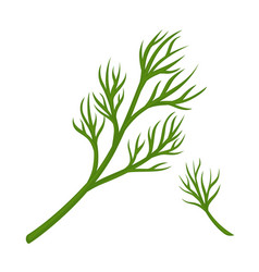 green dill branch vector image
