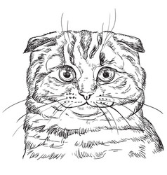 Hand drawing cat 4 vector