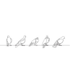 pigeon one continuous line set vector image