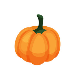 Pumpkin isolated on white background in cartoon vector