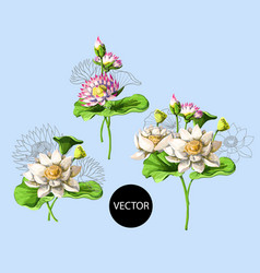 bouquet of waterlily hand draw in water vector image