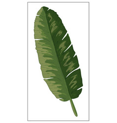 Realistic palm leaf on a white background vector