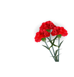 Realistic red flower carnation isolated white vector