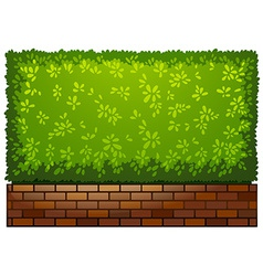 A landscaping green plant vector image vector image