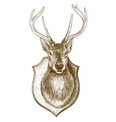 engraving stuffed deer head vector image