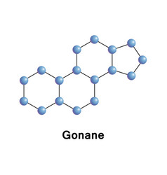 gonane known as perhydrocyclopentaphenanthrene vector image vector image