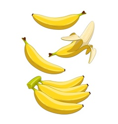 Banana Tropical fruit vector image