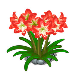 flowerbed of red flowers on a white background vector image