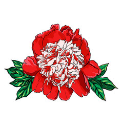 hand drawn peony flower on vector image