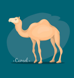 Image of a camel vector