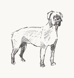 rottweiler hand drawn dog realistic sketch vector image