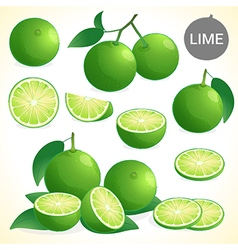Set of green lime with leaf in various styles vector