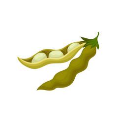 Soya bean pod healthy vegetarian food vector