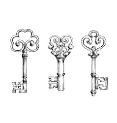 Sketch of vintage keys with curly elements vector image vector image