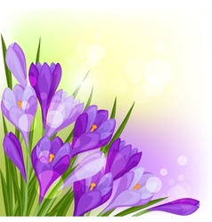 Spring flowers crocus natural background vector image vector image