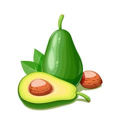 Avocado tropical exotic vector