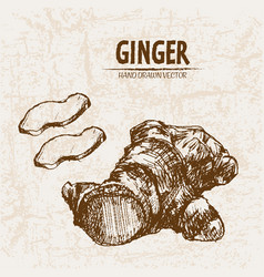 Digital detailed line art ginger vector