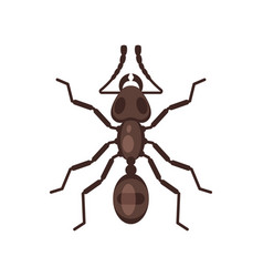 flat style of ant vector image