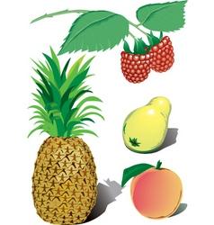 fruit illustration vector image