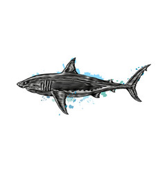 great white shark from a splash watercolor vector image