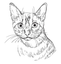 Hand drawing cat 8 vector