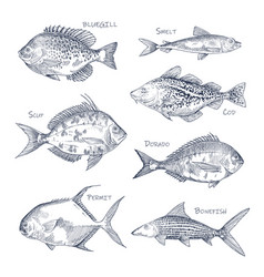 Seafood sketch or set isolated hand drawn fish vector