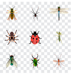 Set of bug realistic symbols with black widow vector