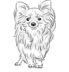 Cute dog chihuahua vector