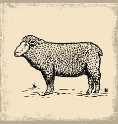 sheep on grunge background design element for vector image