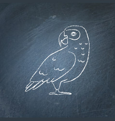 african grey parrot icon sketch on chalkboard vector image