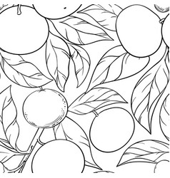 mandarin branches pattern vector image