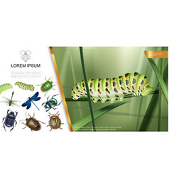realistic insects composition vector image