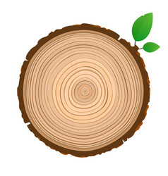 wood sign icon cross section of the trunk with vector image