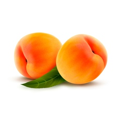 Rpe peach isolated on white vector image vector image