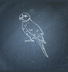 Alexandrine parrot icon sketch on chalkboard vector