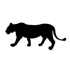 black silhouette of running lioness on white vector image