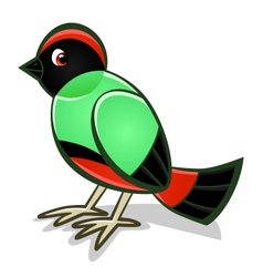 cartoon bird two vector image