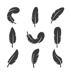 feathers icon set image vector image