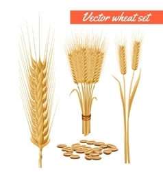 Wheat plant heads and grain poster vector