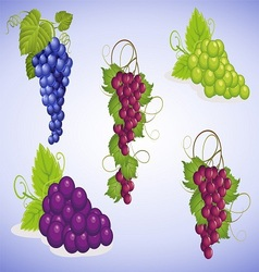 Fresh grapes stock eps vector