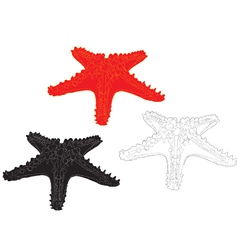 Starfish on white background vector