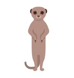 meerkat vector image vector image