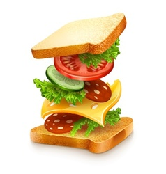 exploded view of sandwich vector image