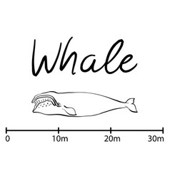 silhouette of whaleblue whale isolated black and vector image vector image